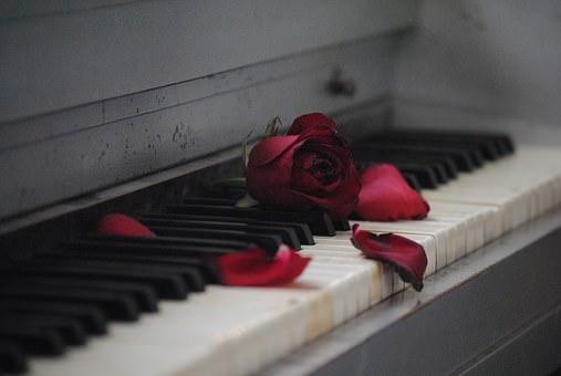 piano, privilege, music, book