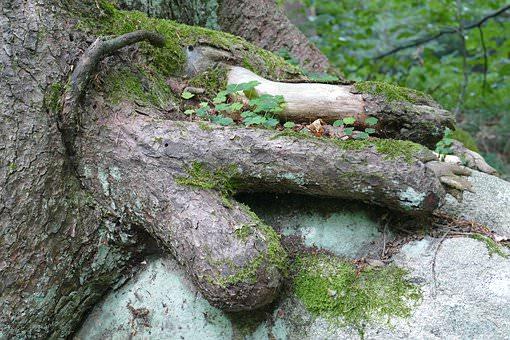 erotic tree, weird, phallic shape, strange fetish, kink, bizarre